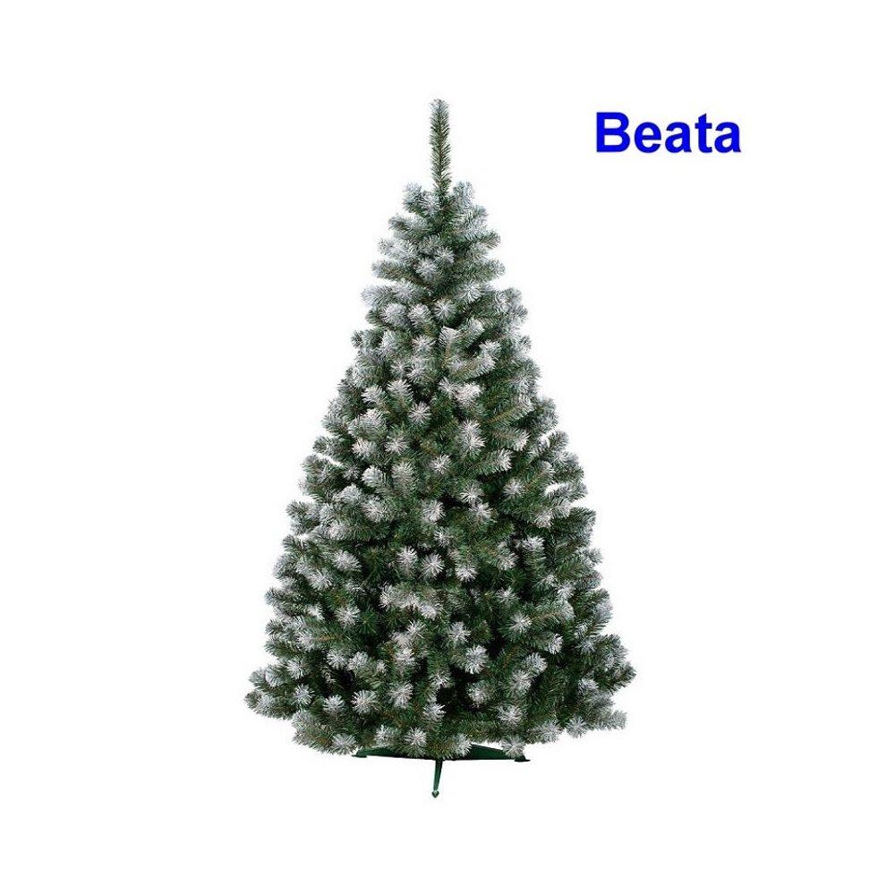 Sibírska jedľa - BEATA