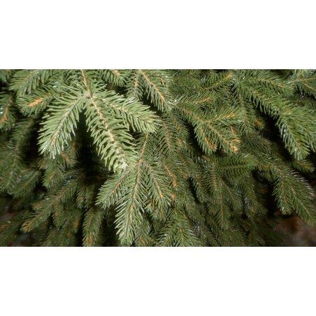 Vianočný stromček - Jedľa EXCLUSIV 180 cm